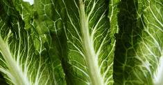 Officials Identify a Source in the Romaine Lettuce E. Coli Outbreak