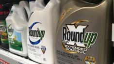 Jury: Monsanto to pay $2B in weed killer cancer case