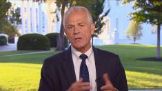 Presidential trade adviser Peter Navarro continues to tout hydroxychloroquine