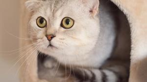10 Reasons Cats Poop Outside Their Litter Box & How To Resolve The Issue