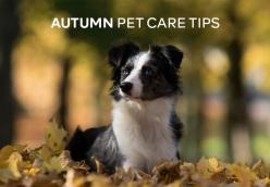 Autumn Pet Care Tips
