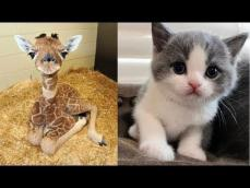 So many cute kittens videos compilation 2018 #1 FunnyAnimals