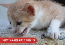 5 Most Common Kitty Diseases