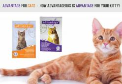 Advantage for Cats – How Advantageous is Advantage for Your Kitty!