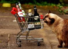 Volunteers Wanted: Must Want To Drink Wine And Feed Shelter Cats