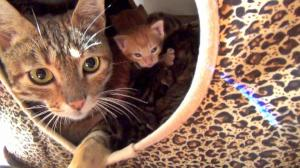 The Great Mama Cat & Kittens Escape!