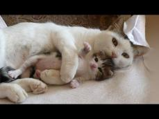 Mother Cats taking care and Protecting their cute Kittens safety Mom cat and Kitten Compilation