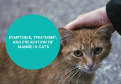 SYMPTOMS, TREATMENT, AND PREVENTION OF MANGE IN CATS