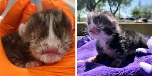Kitten Who Was Born Very Special, Gets Help Just in Time and is Determined to Live and Thrive