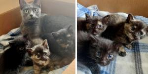 Rescued Cat and Her 3-Pawed Kittens Travel Across States for a Chance at Better Life