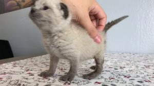 SO CUTE Kittens Learning to Walk!