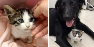 Woman Went to Walk Her Dogs but Came Home with a Kitten Who Needed Help