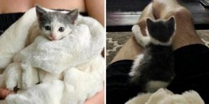 Family Rescued Kitten from Parking Lot Just in Time and Found Another Kitty to Be Her Friend