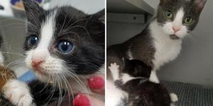 Cat Takes In a Rescued Kitten and Adopts Another Who Needed a Mom