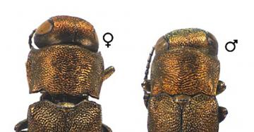 Meet the Beetles: Newly Discovered Brooklynites Have 6 Legs
