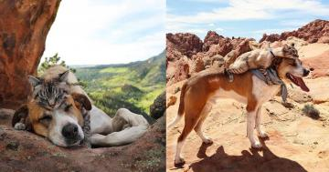 These Cat and Dog BFFs Travel Together and Pose For the Most Amazing Photos