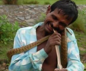 Role Reversal: Indian Man Bites Snake To Death