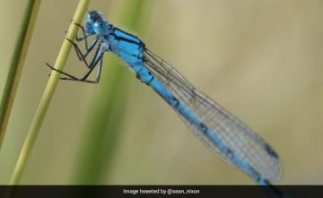 "Maharashtra: ""Nearly Extinct"" Damselfly Species Found Near Satara Dam"