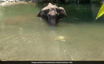 Top Court Notice To Centre, Kerala, 12 Other States Over Elephant's Death