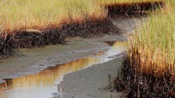 $205M in BP spill money for Louisiana coastal restoration