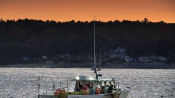 Maine lobster business salvaged its summer despite pandemic