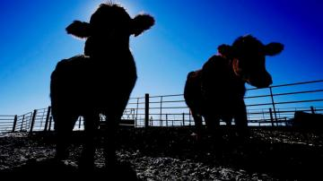 Push to prevent next meat shortage hits big obstacle
