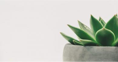 How to Be the Best Plant Parent to Your Skin-Saving Aloe Vera Tree