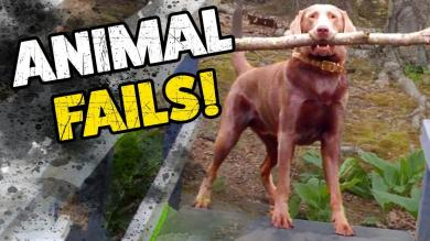 ANIMAL FAILS! | The Funniest Pet Clips | November 2018