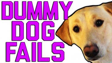 Dummy Dogs || Dog Fails By FailArmy