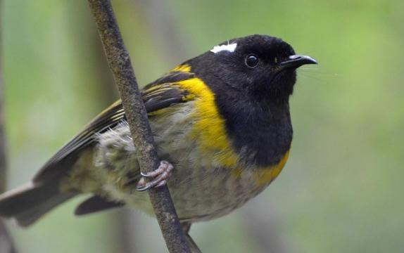 Biologists Track Tweets to Monitor Birds