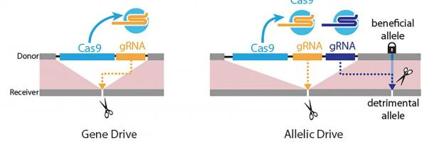 Next-generation gene drive arrives