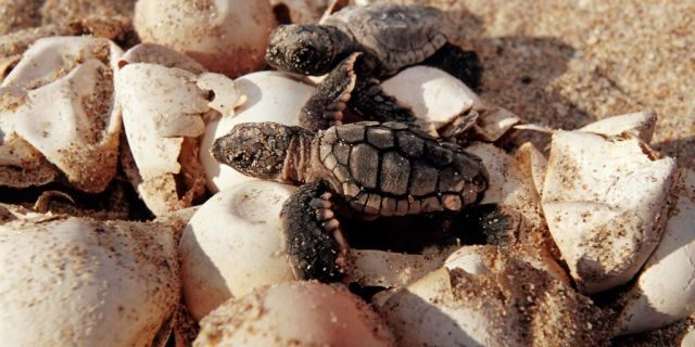 turtle-eggs-florida-Getty-Images.jpg?ve=1&tl=1