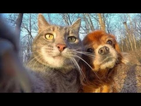 Funny Dogs Videos Try Not To Laugh Clean Funny Dog And Cat Videos