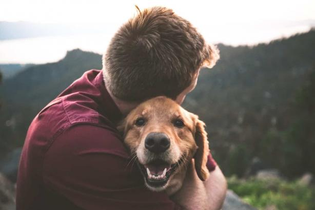 Benefits of Having a Pet: Why Keeping Pets Gives You Positive Energy