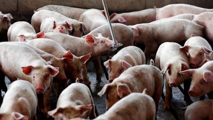 Court upholds nuisance verdicts against hog-production giant