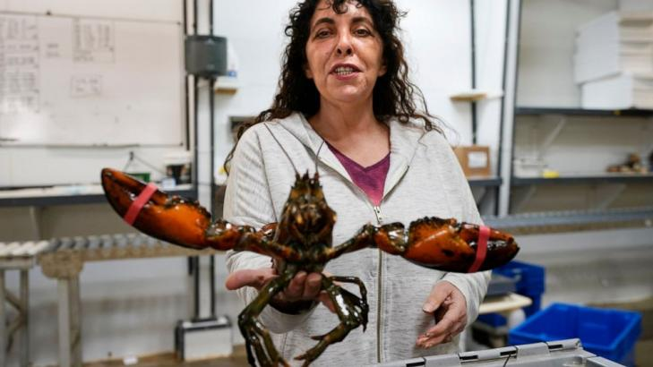 Lobster biz hopes for stability after tumultuous Trump era