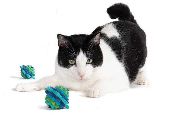 Houspanther-Cat-Toys.jpg